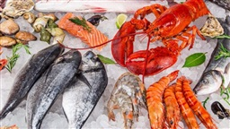 Climate Change Could Cause Toxic Mercury to Accumulate in Seafood, Study Warns