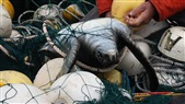 Adding Lights to Fishing Nets Could Save Species from Extinction
