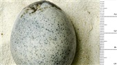 Archaeologists Accidentally Break Eggs that Had Been Going Off for 1,700 Years