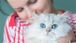 Women Better than Men at Reading a Cat's Facial Expressions