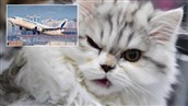 Plane Forced to Land in Sudan After Cat Attacks Pilot in Mid-Air, 'Hijacking' Cockpit