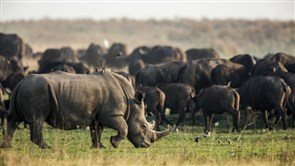 COVID-19 Crisis Could Lead to a 'Poaching Pandemic', Warn Leading Conservationists