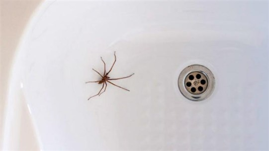 Why You Really Shouldn't Kill the Spiders in Your Home, According to an Entomologist