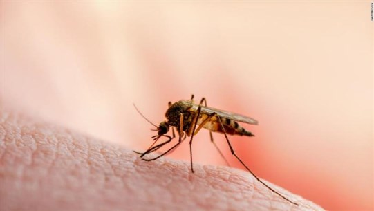 Lower Income Neighborhoods Have Bigger Mosquitoes That May Spread Diseases