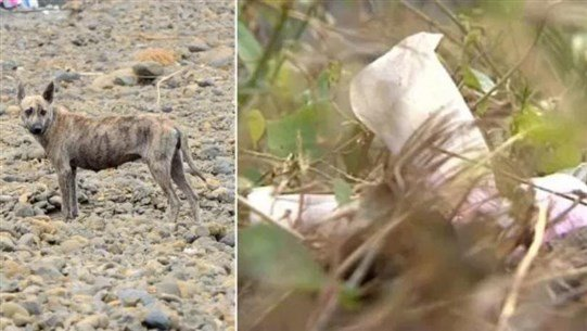 Abandoned Baby Boy 'Eaten Alive by Wild Dogs'