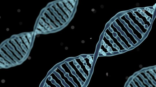Scientists Detect 'Ghost' DNA from Mysterious Human Species