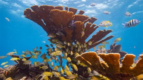 Climate Change Could Wipe Out Every Coral Reef by 2100
