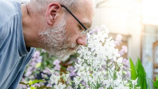Why Are Loss of Smell and Taste Reportedly Symptoms of Coronavirus?