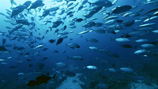 Warming Temperatures Threaten Hundreds of Fish Species, Study Finds