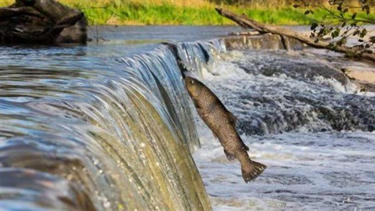 Nearly One Third of Freshwater Fish Face Extinction, WWF Says